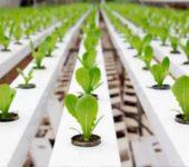 La rentabilidad de las mesas de cultivo